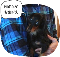 MOMOがお出迎え