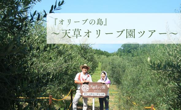 『オリーブの島』~天草オリーブ園ツアー~
